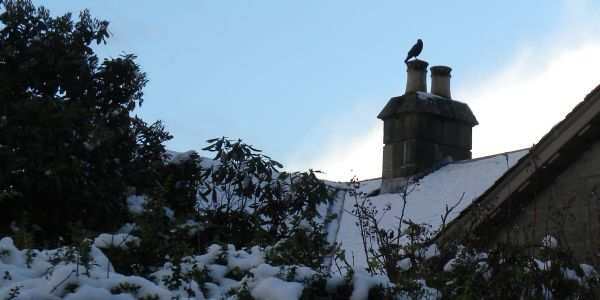 Big Black Bird on a Chimney Pot